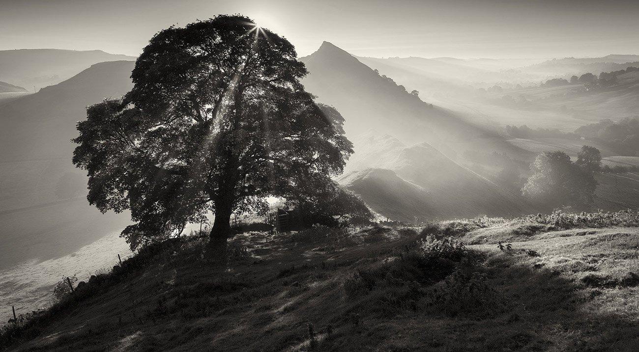 Matt Oliver - photographer - Chrome Tree